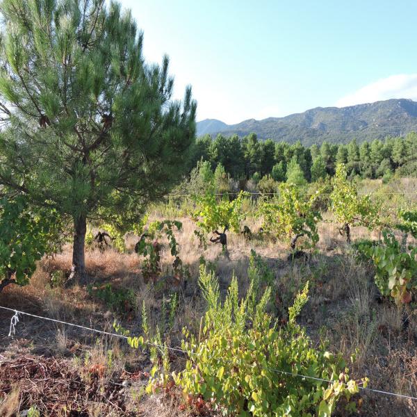 Offres de vente Terrain Argelès-sur-Mer 66700